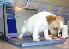 puppy peeing on keypad