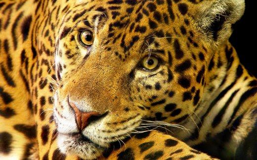 Jaguar Symbolism