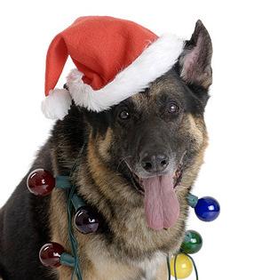 Conan Christmas Hat