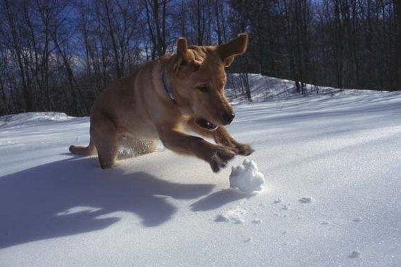 Dog Getting Snow Ball