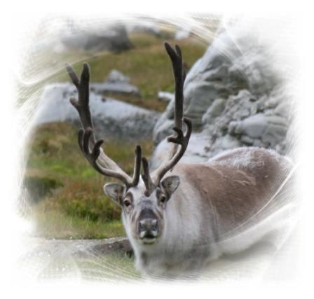 Reindeer Symbolism